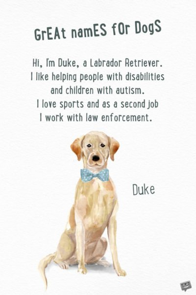 Hi, I'm Duke, a Labrador Retriever. I like helping people with disabilities and children with autism. I love sports and as a second job I work with law enforcement.