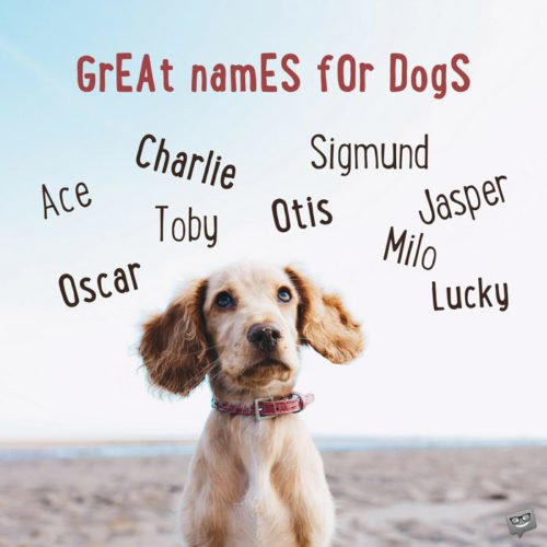 Great names for dogs.