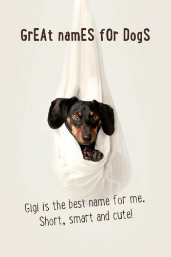 Gigi is the best name for me. Short, smart and cute!