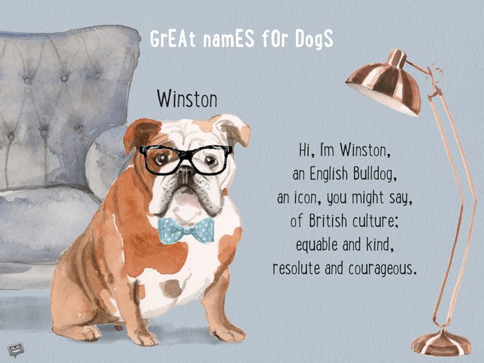 Hi, I'm Winston, an English Bulldog, an icon, you might say, of British culture; equable and kind, resolute and courageous.
