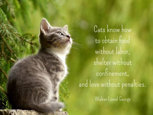 Cats know how to obtain food without labor, shelter without confinement, and love without penalties. Walter Lionel George