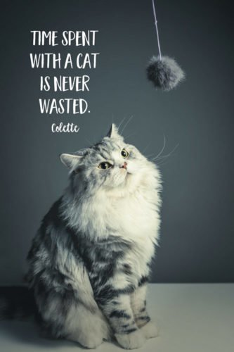 Time spent with a cat is never wasted. Colette