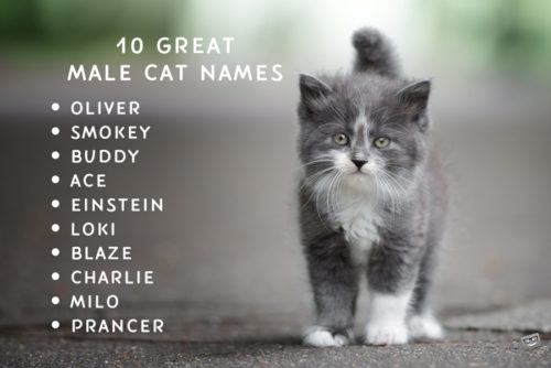 A list of 10 names for male cats.