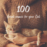 Featured image for 100 names for cats.