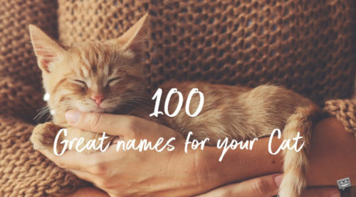 Cover photo for 100 names for cats.