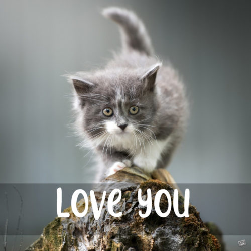 Love you quote on photo with kitten.