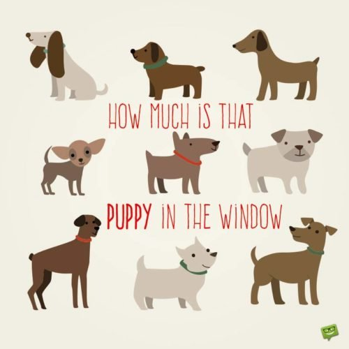 How much is that puppy in the window.