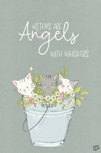 Kittens are angels with whiskers. Alexis Flora Hope