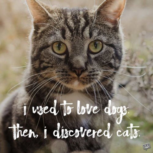 I used to love dogs. Then, I discovered cats.