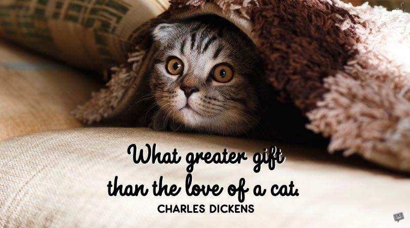 Adorable Meow | Love Quotes for my Kitten