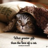 What greater gift than the love of a cat. Charles Dickens