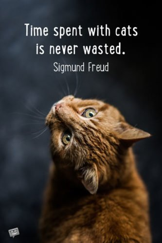 Time spent with cats is never wasted. Sigmund Freud