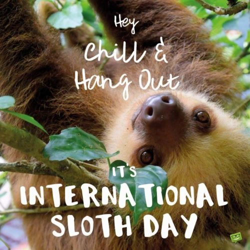 Hey, chill and hang out. It's international sloth day.