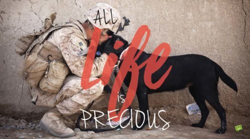 All life is precious.