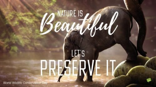 Nature is beautiful. Let's preserve it.