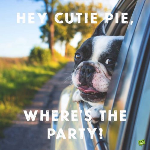 Hey Cutie Pie, Where's the Party?
