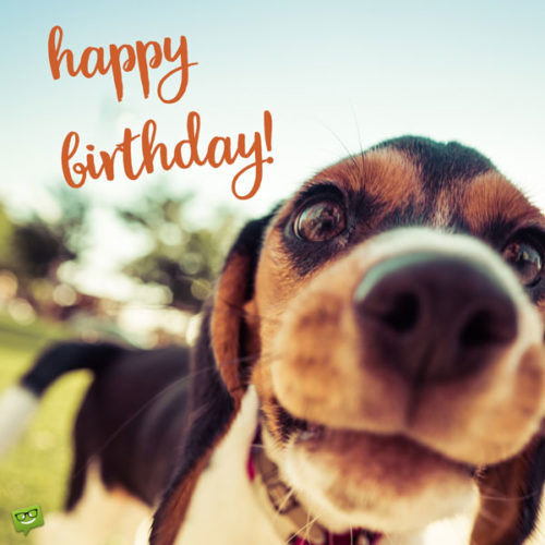 Happy Birthday, Cute Dog! | Heart-Touching Wishes for Puppies