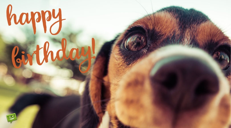 Candles on Dog Food | Heart-Touching and Cute Wishes for a Dog's Birthday