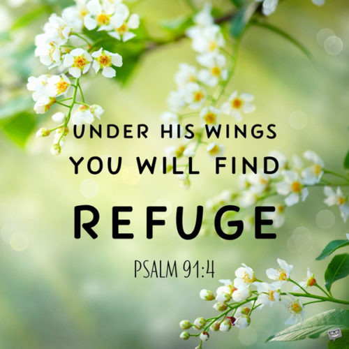 Under his wings you will find refuge. Psalm 91:4