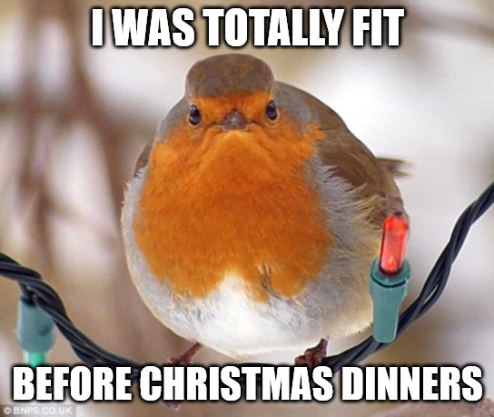 I was totally fit before Christmas dinners Bah Humbug Bird Meme