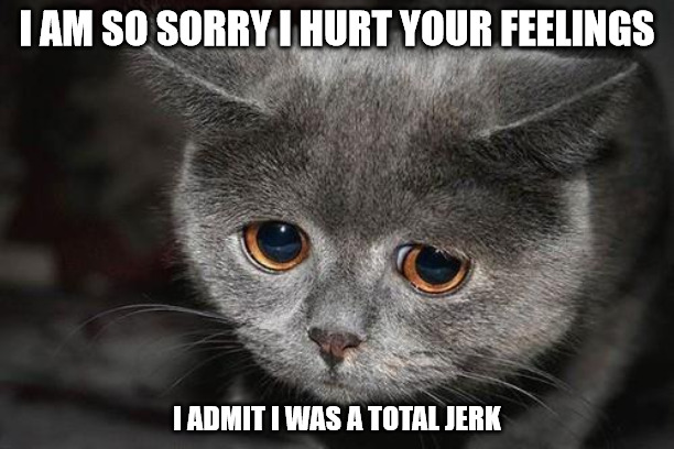 I am so sorry - Sad cat meme.