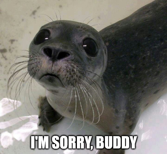 I m sorry buddy - Sad baby seal meme