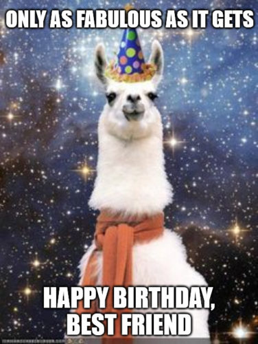 Happy Birthday Best Friend Alpaca meme.