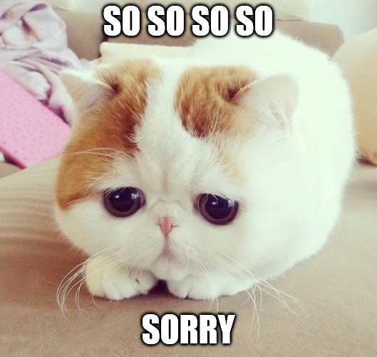 So so so so sorry - sad cat meme.
