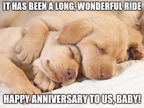 Cute puppies resting Anniversary Meme.