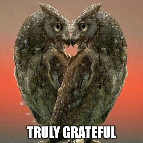 Gratitude is the most exquisite form of courtesy Meme.