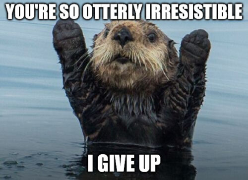 Cute love meme with otter.